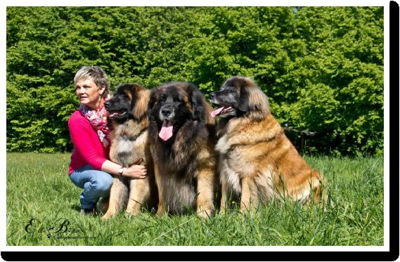 Leonberger Hunde Zucht In Heiligenhaus Natali Rogi